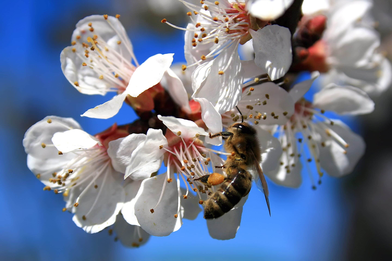 Home 4 Rette die Bienen scaled
